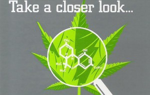 medical-cannabis-for-beginners