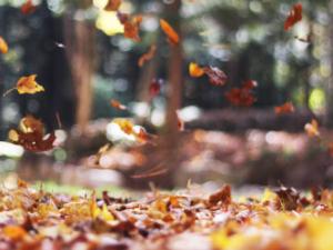 seasons-pic